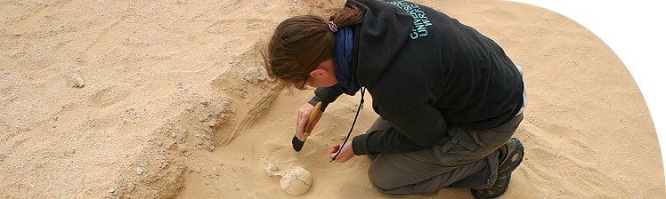 Cleaning sand from a skull in the South Tombs cemetery (Grid 14) behind the South Tombs (2006 season).