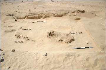 Figure 25. Bone Cluster (11617) and burials in the vicinity. View site north