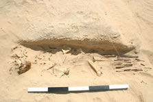 Figure 10. Disturbed burial of Individual no. 43 showing disarticulated bone exposed by the excavation of unit (12047) and intact matting at the western end of the pit. View site south.