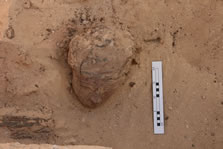 Figure 3. Wooden face of an anthropoid coffin resting in fill (12219) within burial pit <12132>. View site east. See also Figure 65.