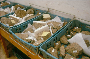 Trays of unsorted fragments of red granite statue from the North House Dump awaiting further study
